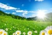 6647163-primavera-sulle-alpi-con-fiori-e-cielo